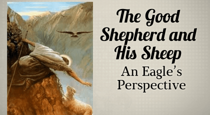 The Good Shepherd – An Eagle's Perspective
